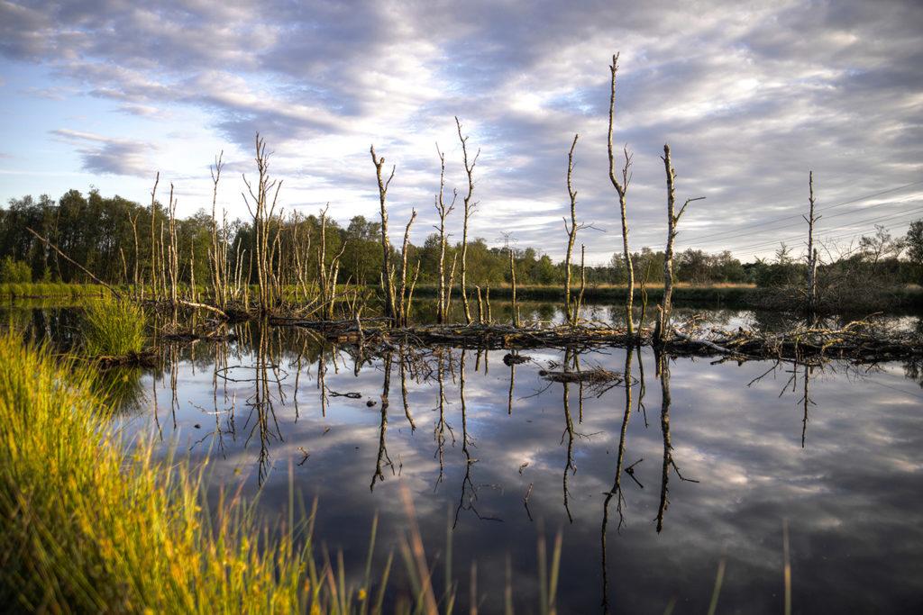 Decimated Wetlands