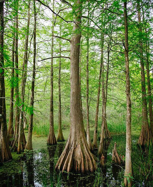 Beautiful Wetlands