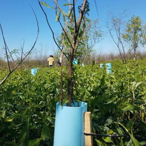 Volunteers plant 5 miles of coastal restoration