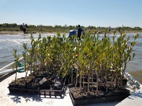 Planting  Bottomland Hardwood Trees