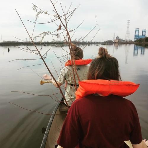 Planting cypress trees in Bayou Bienvenue